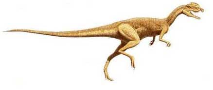 Especies de dinosaurios2